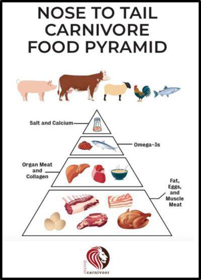 Doctor Carnivoor - carnivoordieet - voedselpyramide