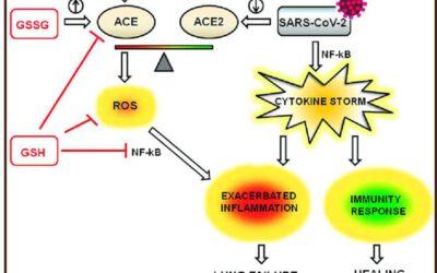 Versterk je immuunsysteem door je metabole gezondheid te optimaliseren – deel 3